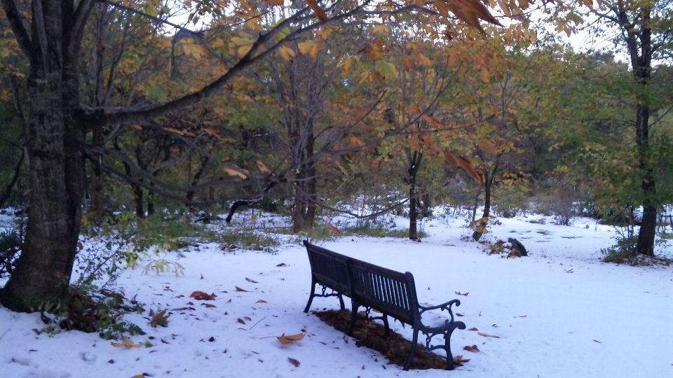 Nov-3-2009-image20090938.jpg